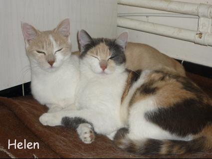bibi & hermione 010410-03