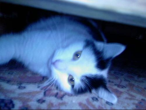 Nina (7)