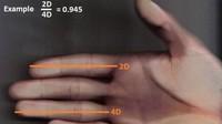 longueur doigt