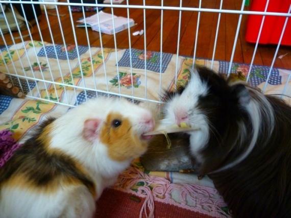 Mousse et Polux avec Loves-animal