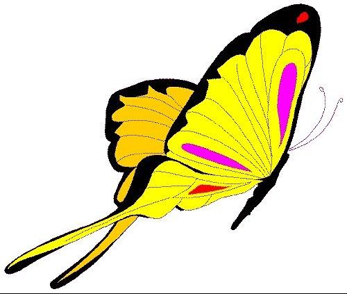 insecte_014