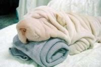 serviette pour lynea