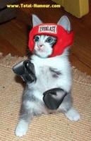 combat de chat