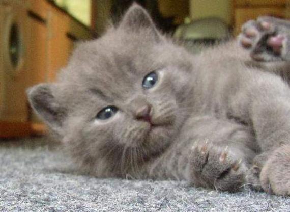 que s ais dure la vie de chats