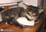 et oui je caline une souris surprenant pou un chat