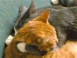calin de chats
