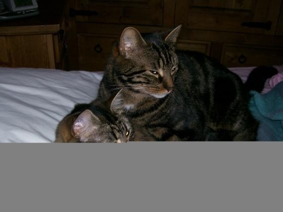 mes deux chats