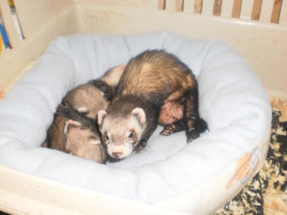 zebeline,avec ses bébés: