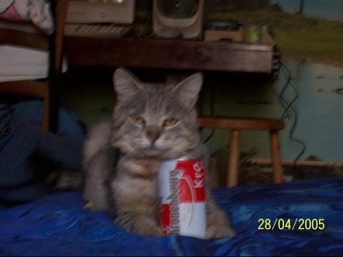 Kikou chat et la kronenbourg