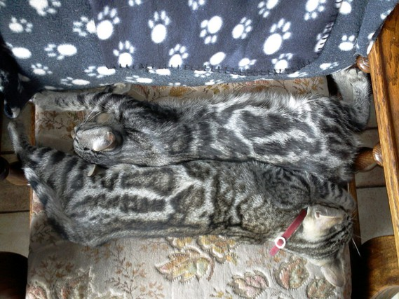 Figaro et son frère
