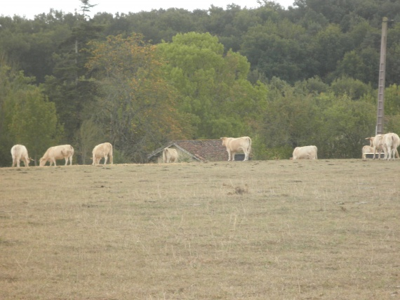 campagne-gersoise-pa081570-img