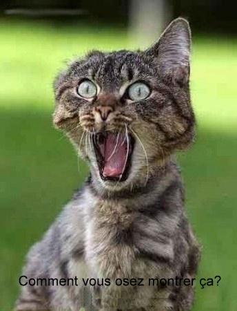 medium_chat-peur-humour-animal