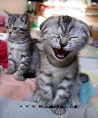 3633_chat-moqueur-humour-animal