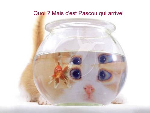 3633_chat-poisson-rouge-humour-animal