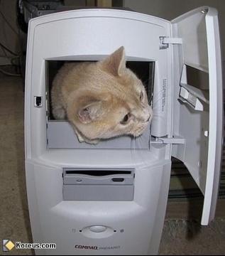 chat_dans_l_ordinateur_main_image
