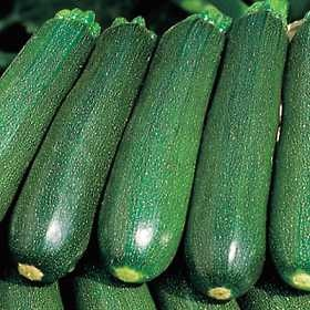 Courgette5