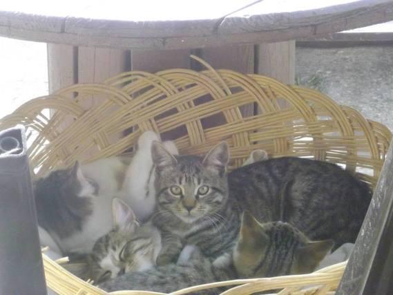 Jack ( la maman) et ses petits