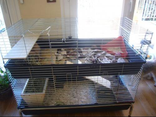 cage d 39 un cochon d 39 inde d pense par moi hamsters. Black Bedroom Furniture Sets. Home Design Ideas