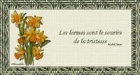 les_larmes_image