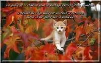 automne_014