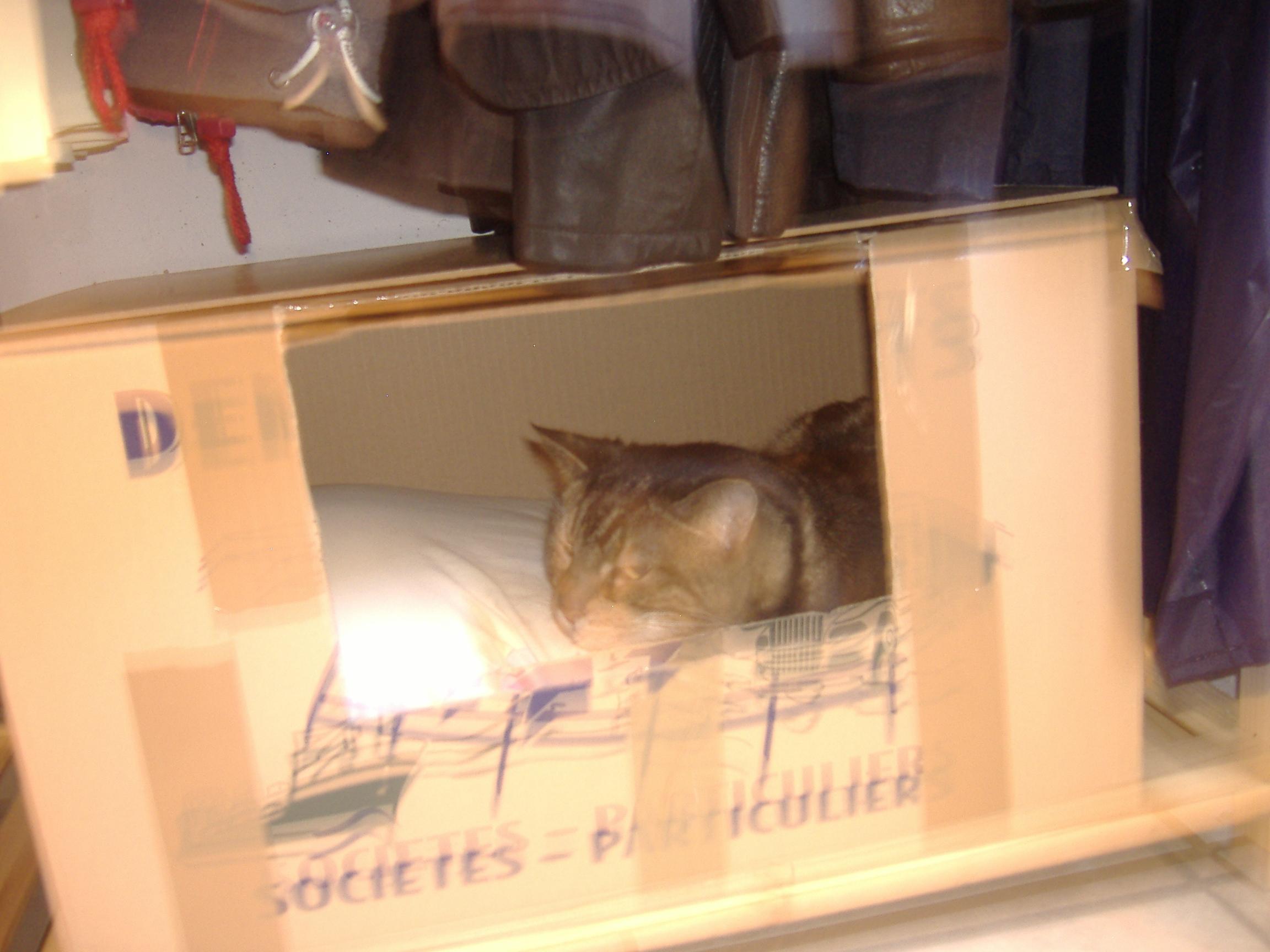 Mon Chat Dort Sur Mes Pieds chat qui dort avec son maitre - page : 2 - chats - forum animaux