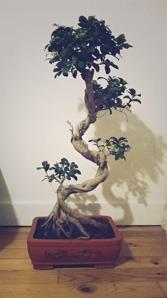 Mon bonsaïounet