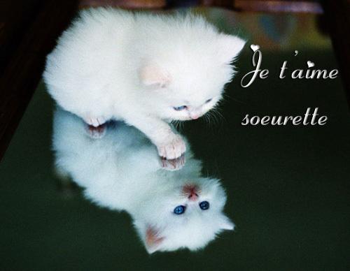 je-t-aime-soeur-chat[1]