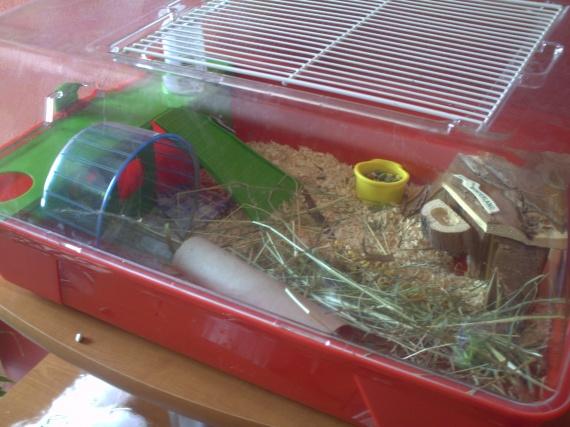am nagement cage photos hamsters cochons d 39 inde lapins forum animaux. Black Bedroom Furniture Sets. Home Design Ideas