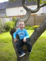 Dans l'arbre en Bretagne