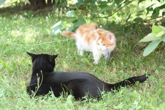 hercule et mimine ds le jardin