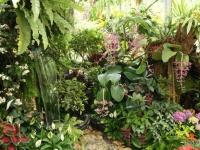 Fleurs tropicales 1