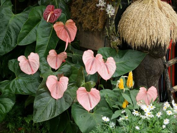 Fleurs tropicales 4