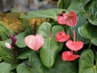 Fleurs tropicales 5