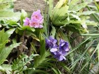 Fleurs tropicales 6