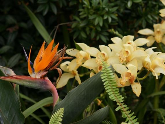 Fleurs tropicales 7