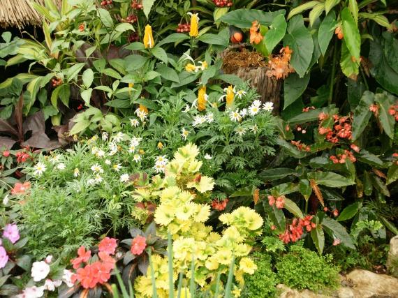 Fleurs tropicales 9