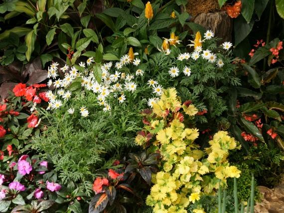 Fleurs tropicales 10