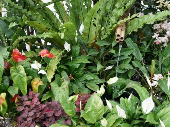 Fleurs tropicales 13