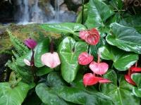 Fleurs tropicales 14