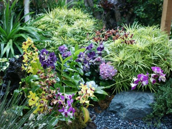 Fleurs tropicales 15