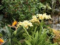 Fleurs tropicales 16