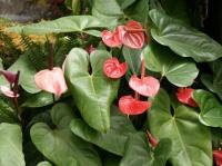 Fleurs tropicales 17