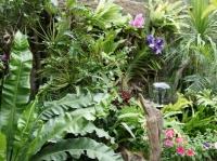 Fleurs tropicales 18