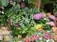Fleurs tropicales 19
