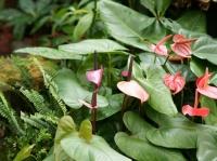 Fleurs tropicales 20