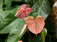 Fleurs tropicales 22