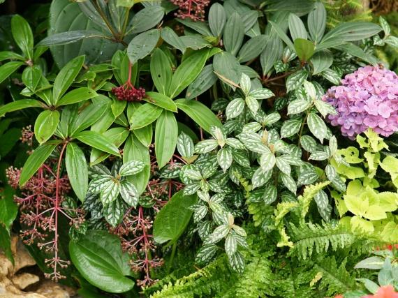 Fleurs tropicales 23