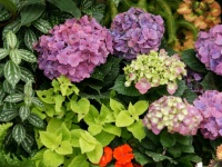 Fleurs tropicales 24