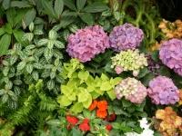 Fleurs tropicales 26
