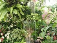 Fleurs tropicales 28